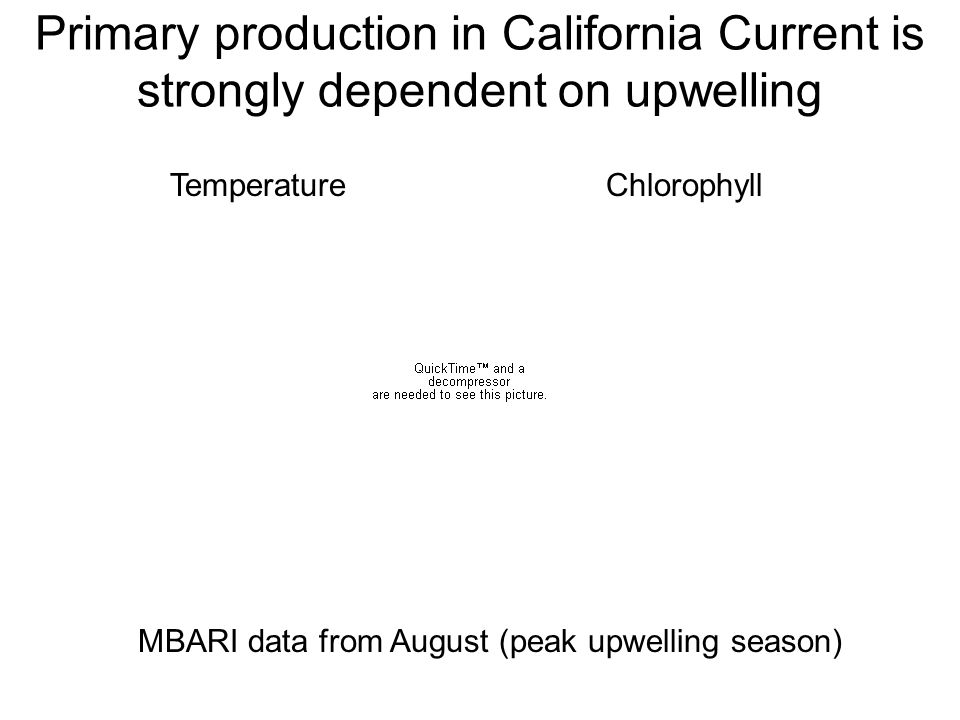 Primary production in California Current is strongly dependent on upwelling Temperature Chlorophyll MBARI data from August (peak upwelling season)
