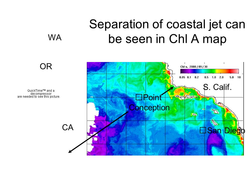Point Conception San Diego S. Calif. Separation of coastal jet can be seen in Chl A map CA OR WA