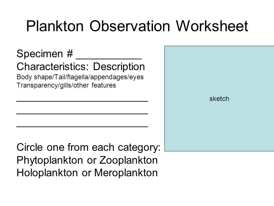 Plankton Observation Worksheet Specimen # ___________ Characteristics: Description Body shape/Tail/flagella/appendages/eyes Transparency/gills/other f