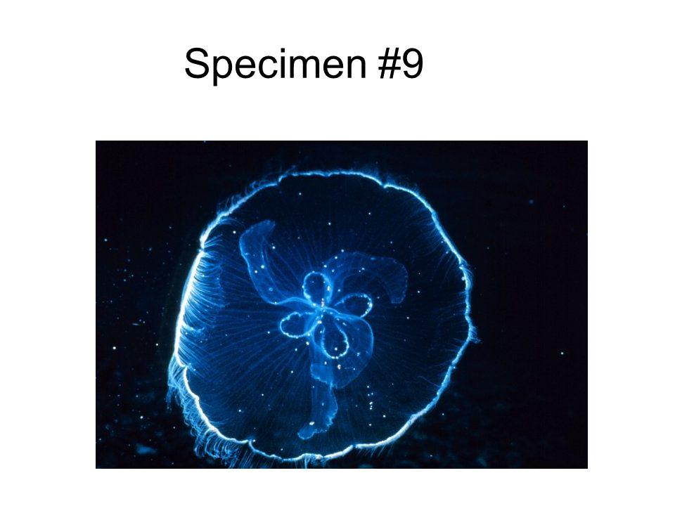 Specimen #9
