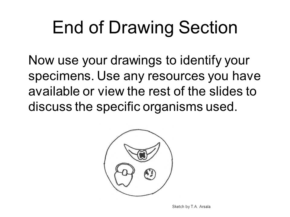 End of Drawing Section Now use your drawings to identify your specimens. Use any resources you have available or view the rest of the slides to discus