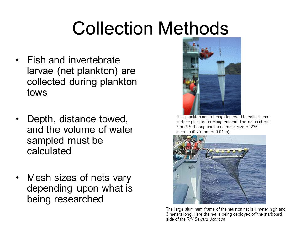 Collection Methods Fish and invertebrate larvae (net plankton) are collected during plankton tows Depth, distance towed, and the volume of water sampl