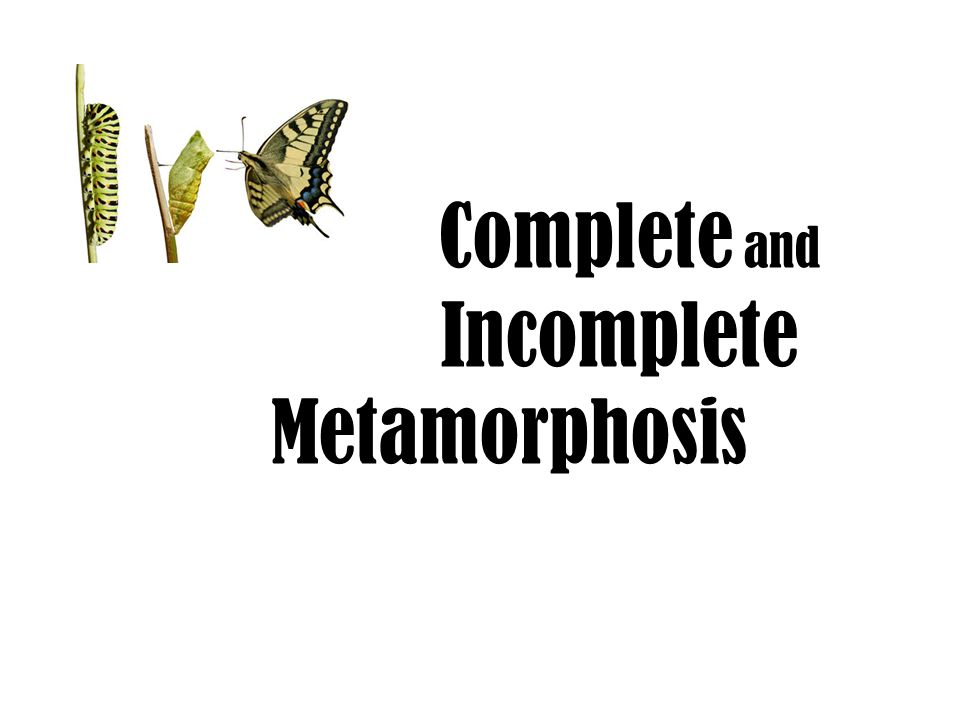 Metamorphosis refers to the way that certain organisms develop, grow, and change form.