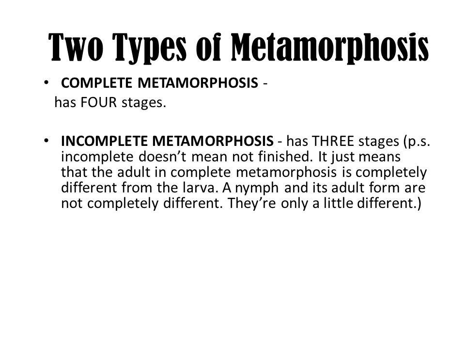 Egg Larva Pupa Adult 4 STAGES OF COMPLETE METAMORPHOSIS