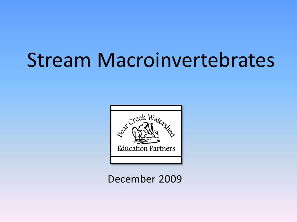 Stream Macroinvertebrates December 2009