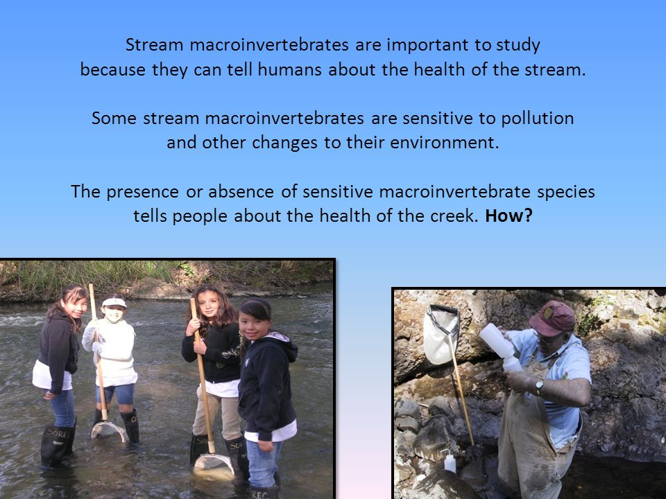 Stream macroinvertebrates are important to study because they can tell humans about the health of the stream.