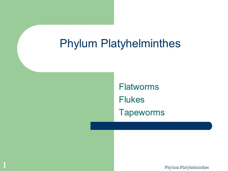 Phylum Platyhelminthes 1 Flatworms Flukes Tapeworms