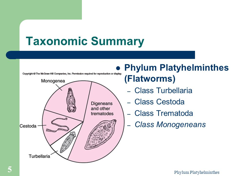 Phylum Platyhelminthes 5 Taxonomic Summary Phylum Platyhelminthes (Flatworms) – Class Turbellaria – Class Cestoda – Class Trematoda – Class Monogenean