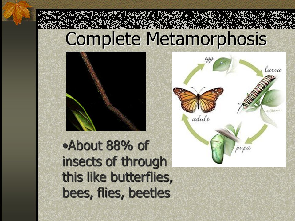 Complete Metamorphosis About 88% of insects of through this like butterflies, bees, flies, beetlesAbout 88% of insects of through this like butterflies, bees, flies, beetles