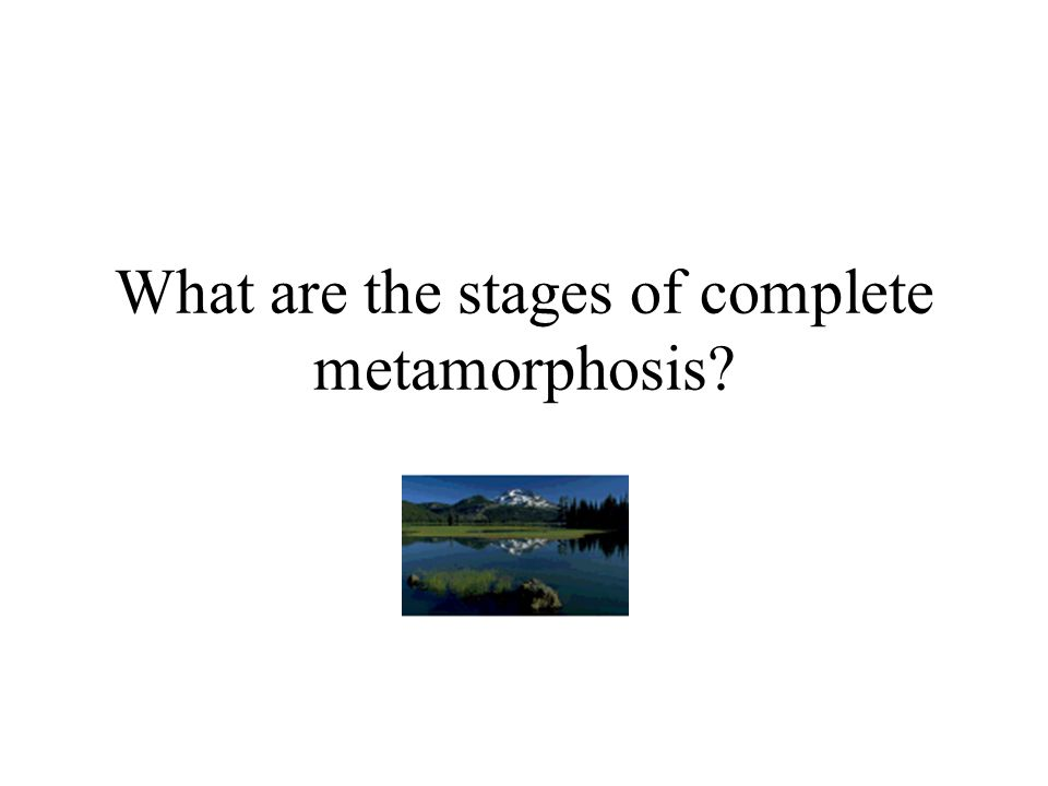 What are the stages of complete metamorphosis?