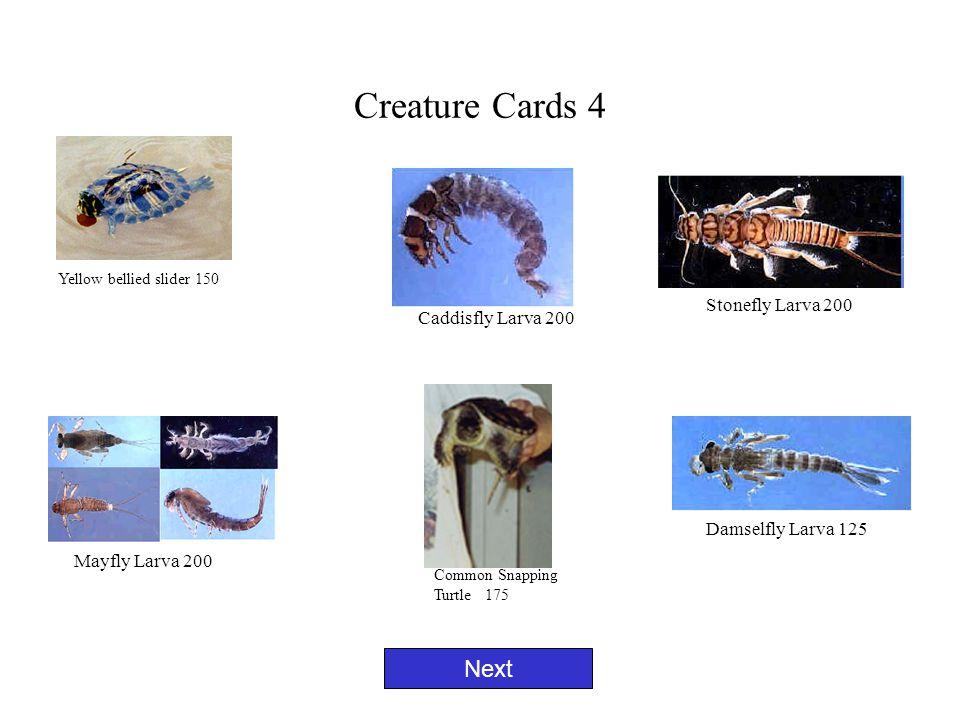 Creature Cards 4 Next Yellow bellied slider 150 Caddisfly Larva 200 Damselfly Larva 125 Mayfly Larva 200 Stonefly Larva 200 Common Snapping Turtle 175