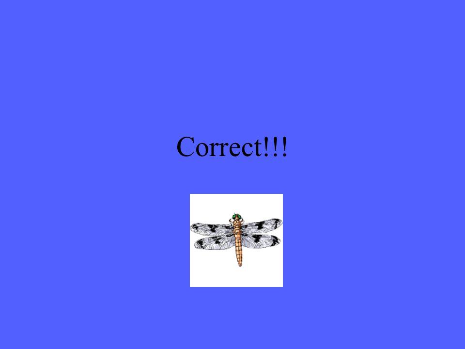What is a macroinvertebrate?