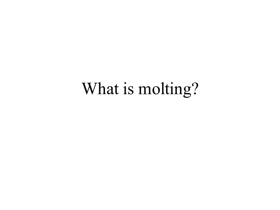 What is molting?