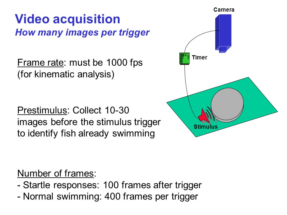 Video acquisition How many images per trigger Number of frames: - Startle responses: 100 frames after trigger - Normal swimming: 400 frames per trigge