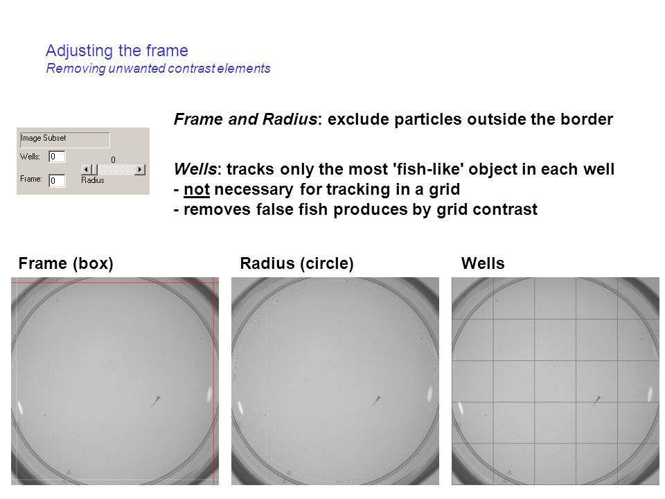 Adjusting the frame Removing unwanted contrast elements Frame (box)Radius (circle)Wells Frame and Radius: exclude particles outside the border Wells: tracks only the most fish-like object in each well - not necessary for tracking in a grid - removes false fish produces by grid contrast