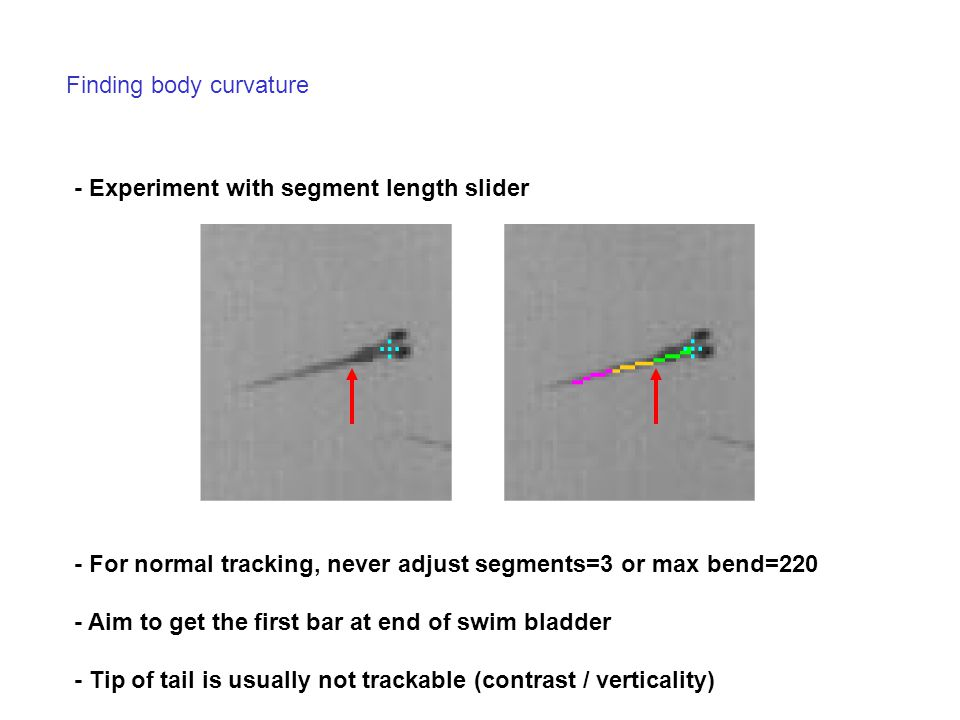 Finding body curvature - Experiment with segment length slider - For normal tracking, never adjust segments=3 or max bend=220 - Aim to get the first b