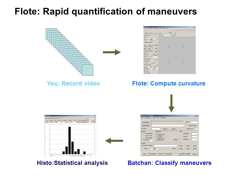 Flote: Rapid quantification of maneuvers You: Record videoFlote: Compute curvature Batchan: Classify maneuversHisto:Statistical analysis
