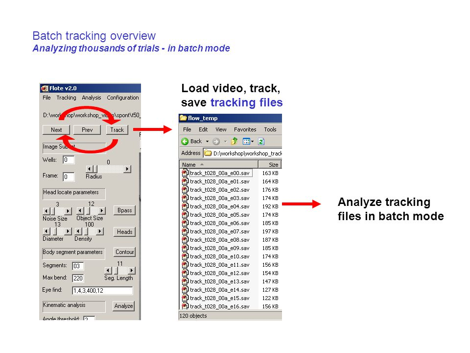 Batch tracking overview Analyzing thousands of trials - in batch mode Load video, track, save tracking files Analyze tracking files in batch mode
