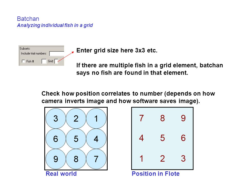 Batchan Analyzing individual fish in a grid Enter grid size here 3x3 etc.