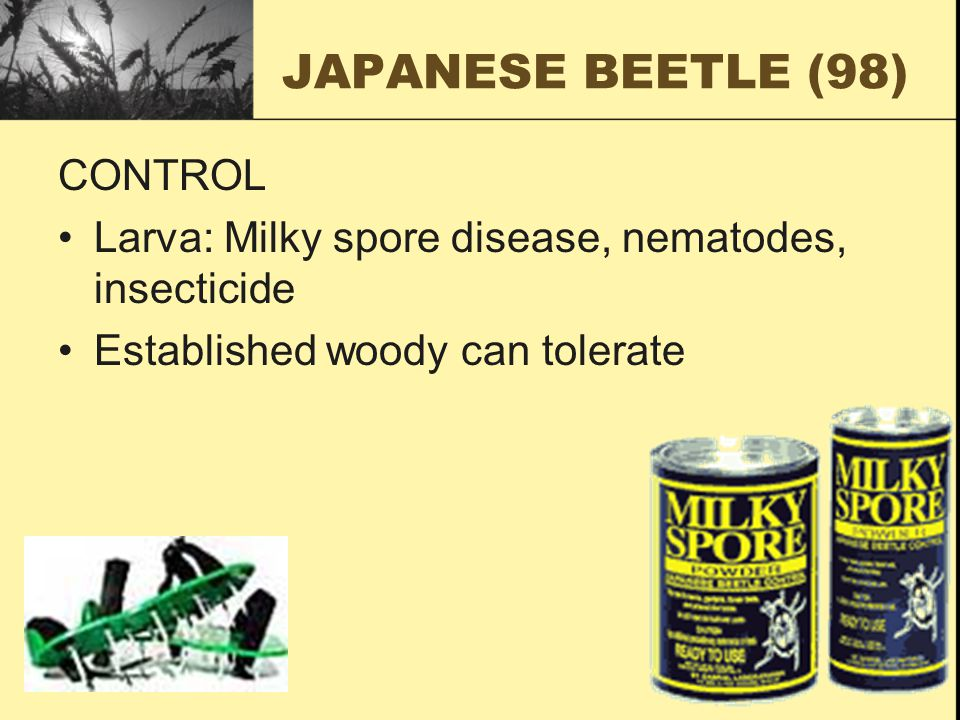 JAPANESE BEETLE (98) CONTROL Larva: Milky spore disease, nematodes, insecticide Established woody can tolerate
