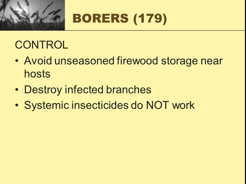 BORERS (179) CONTROL Avoid unseasoned firewood storage near hosts Destroy infected branches Systemic insecticides do NOT work