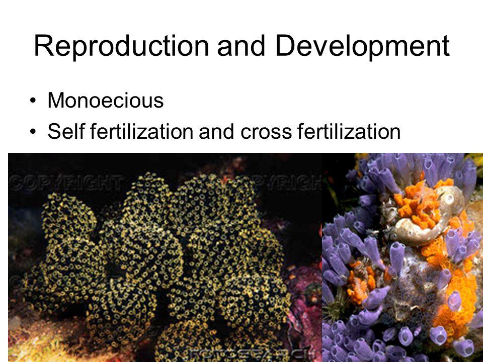 Reproduction and Development Monoecious Self fertilization and cross fertilization