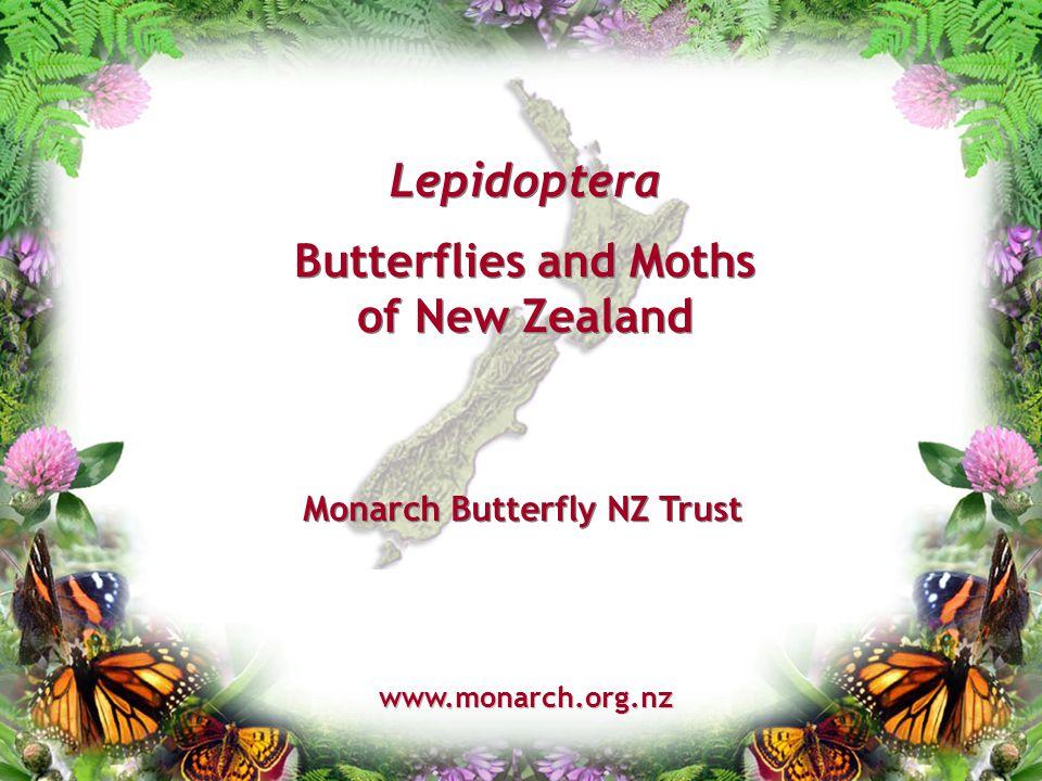 Lepidoptera Butterflies and Moths of New Zealand www.monarch.org.nz Monarch Butterfly NZ Trust