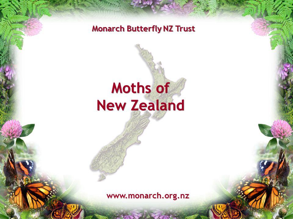 Moths of New Zealand www.monarch.org.nz Monarch Butterfly NZ Trust