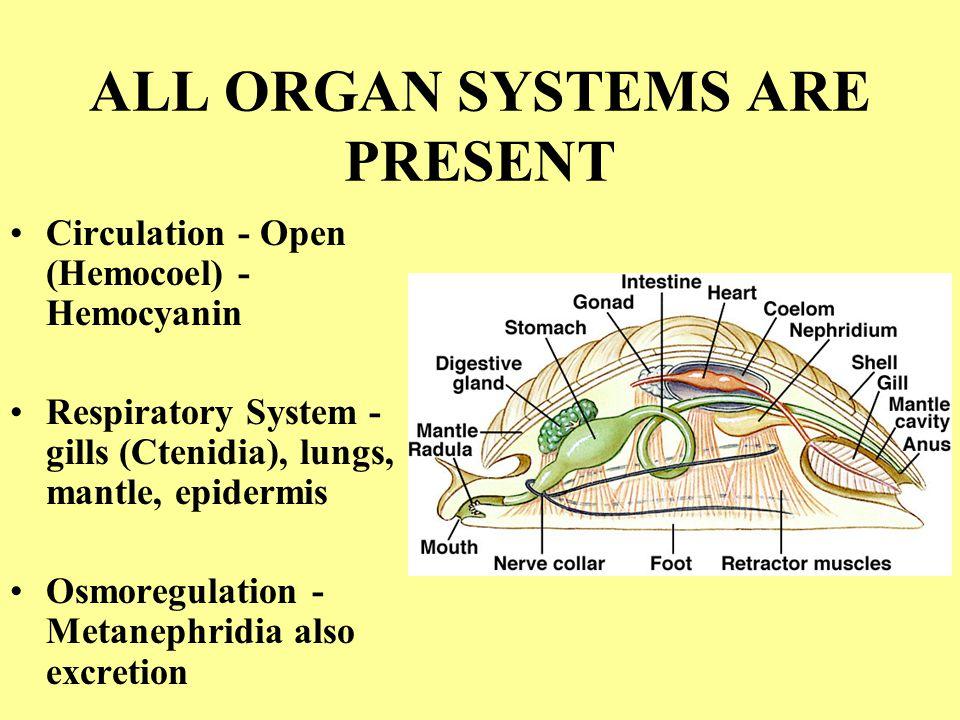 ALL ORGAN SYSTEMS ARE PRESENT Circulation - Open (Hemocoel) - Hemocyanin Respiratory System - gills (Ctenidia), lungs, mantle, epidermis Osmoregulatio
