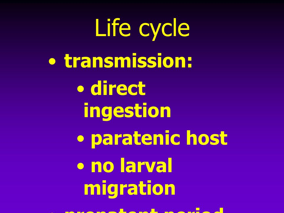 Life cycle transmission: direct ingestion paratenic host no larval migration prepatent period = 8-10 weeks