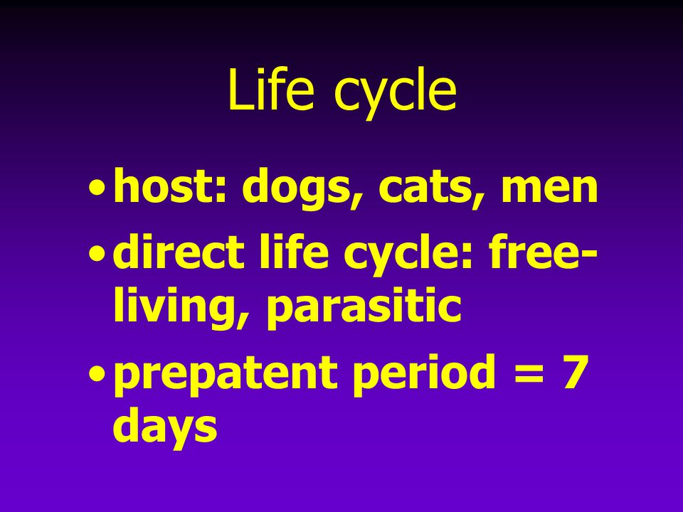 Life cycle host: dogs, cats, men direct life cycle: free- living, parasitic prepatent period = 7 days