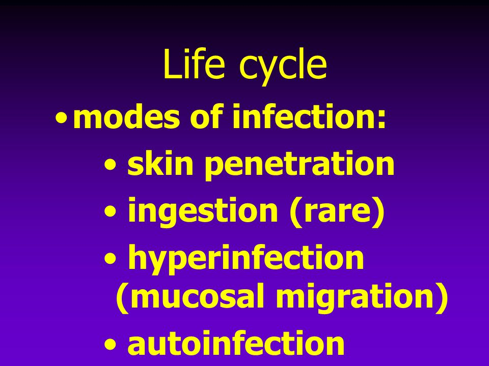 Life cycle modes of infection: skin penetration ingestion (rare) hyperinfection (mucosal migration) autoinfection (perianal area)