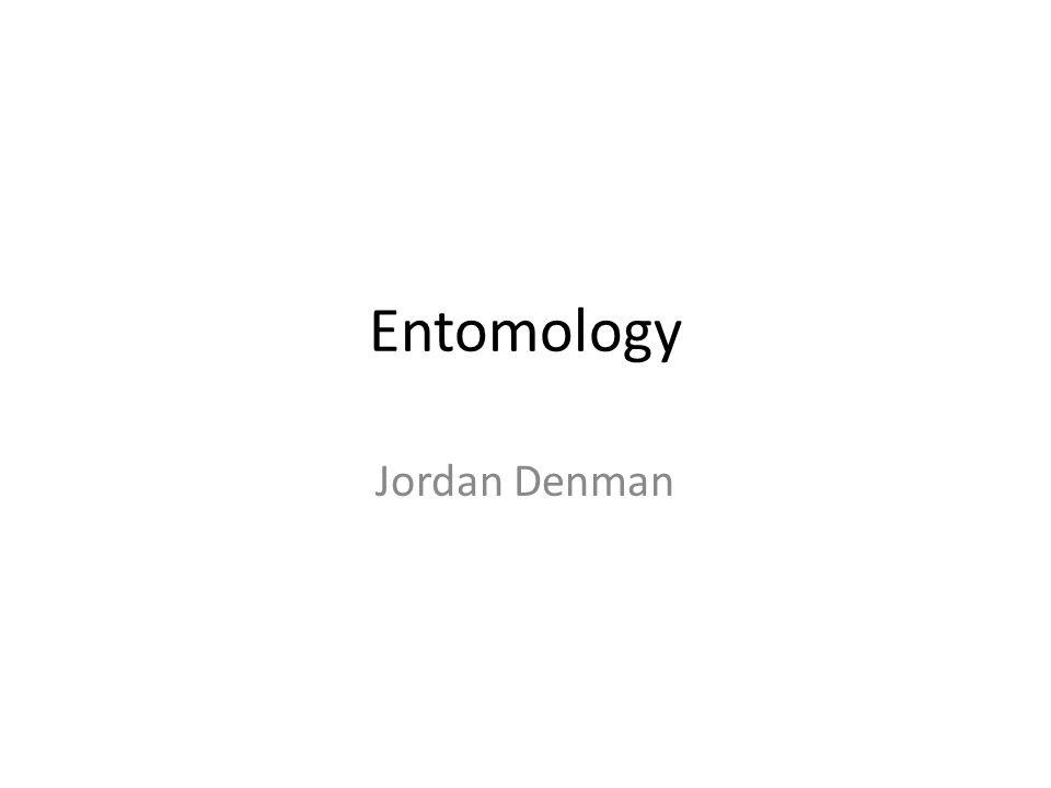 Entomology Jordan Denman