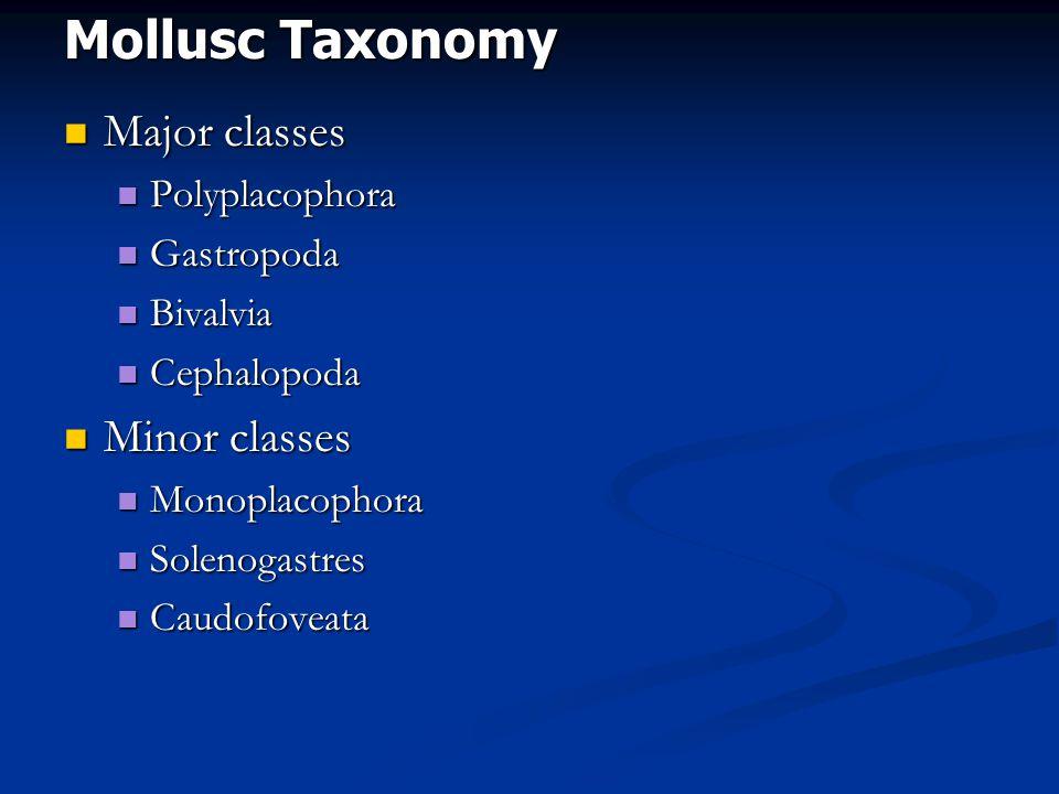 Mollusc Taxonomy Major classes Major classes Polyplacophora Polyplacophora Gastropoda Gastropoda Bivalvia Bivalvia Cephalopoda Cephalopoda Minor classes Minor classes Monoplacophora Monoplacophora Solenogastres Solenogastres Caudofoveata Caudofoveata
