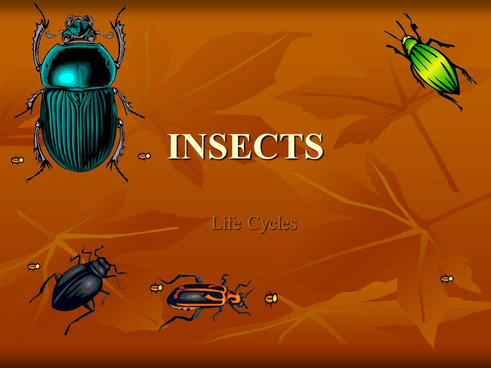 INSECTS Life Cycles