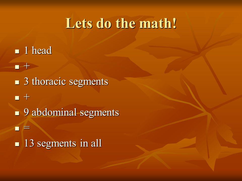 Lets do the math! 1 head + 3 thoracic segments + 9 abdominal segments = 13 segments in all