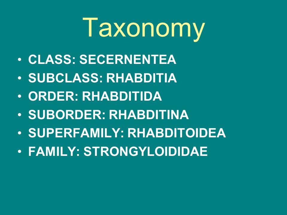 Taxonomy CLASS: SECERNENTEA SUBCLASS: RHABDITIA ORDER: RHABDITIDA SUBORDER: RHABDITINA SUPERFAMILY: RHABDITOIDEA FAMILY: STRONGYLOIDIDAE