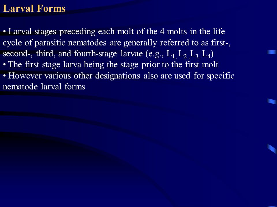 Larval Forms Larval stages preceding each molt of the 4 molts in the life cycle of parasitic nematodes are generally referred to as first-, second-, t