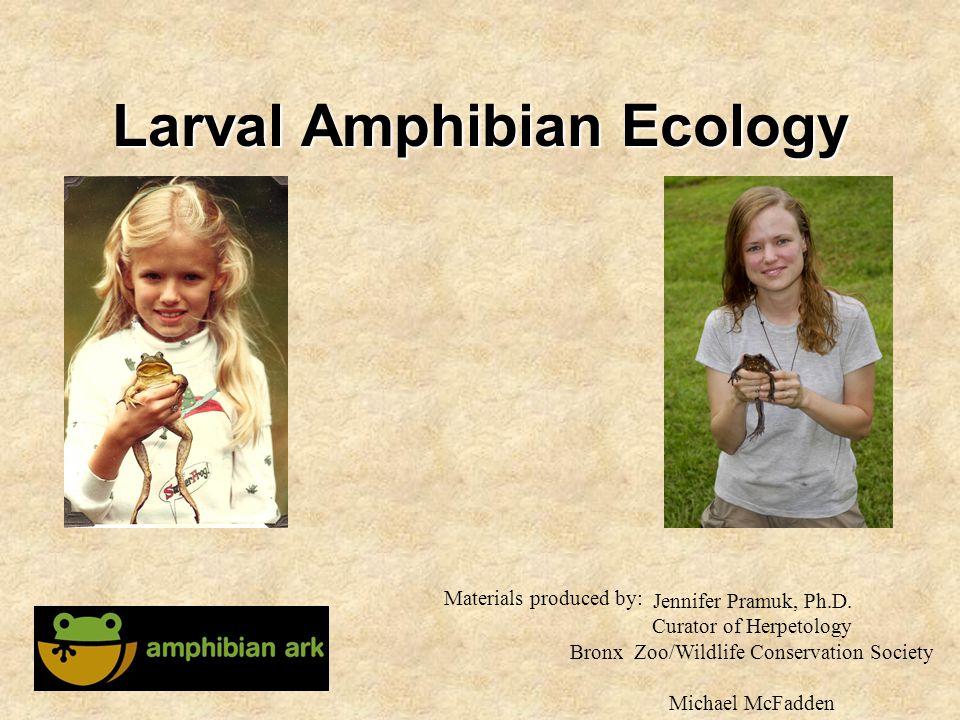 Larval Amphibian Ecology Jennifer Pramuk, Ph.D. Curator of Herpetology Bronx Zoo/Wildlife Conservation Society Michael McFadden Materials produced by:
