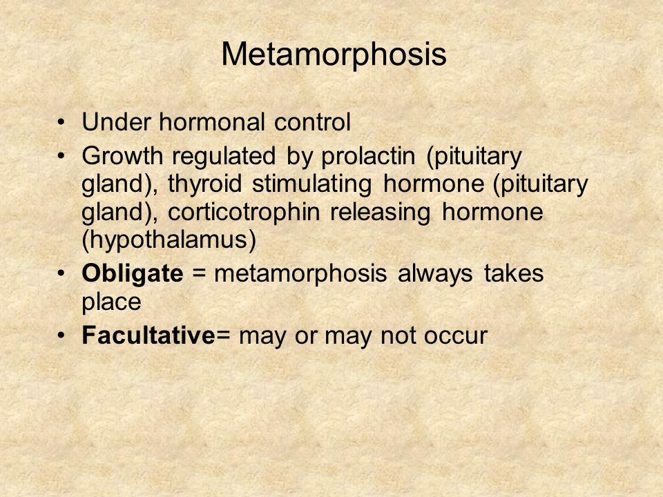 Metamorphosis Under hormonal control Growth regulated by prolactin (pituitary gland), thyroid stimulating hormone (pituitary gland), corticotrophin releasing hormone (hypothalamus) Obligate = metamorphosis always takes place Facultative= may or may not occur