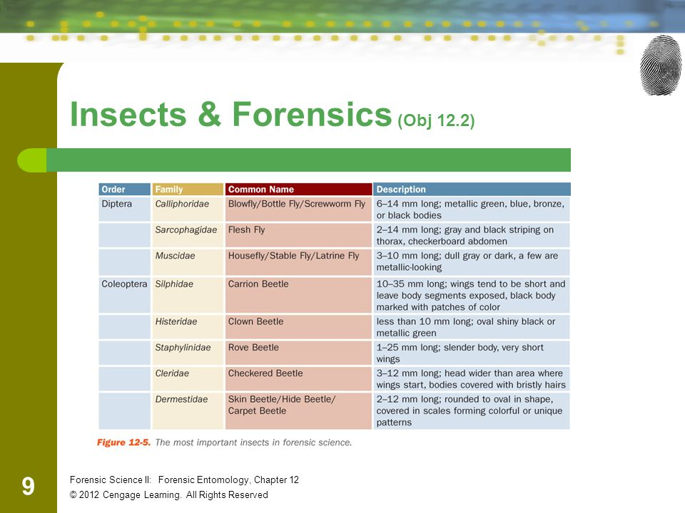9 Forensic Science II: Forensic Entomology, Chapter 12 © 2012 Cengage Learning. All Rights Reserved Insects & Forensics (Obj 12.2)