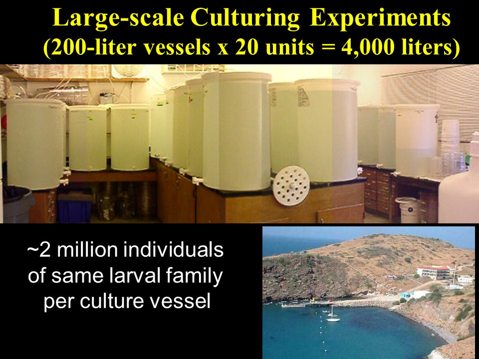 Large-scale Culturing Experiments (200-liter vessels x 20 units = 4,000 liters) ~2 million individuals of same larval family per culture vessel