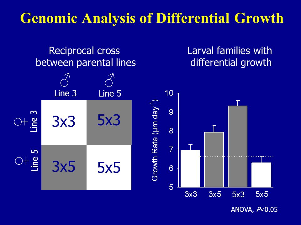 Genomic Analysis of Differential Growth ♂ Line 3 ♀ Line 5 ♂ Line 5 ♀ Line 3 3x3 5x3 3x5 5x5 Reciprocal cross between parental lines Larval families with differential growth ANOVA, P<0.05