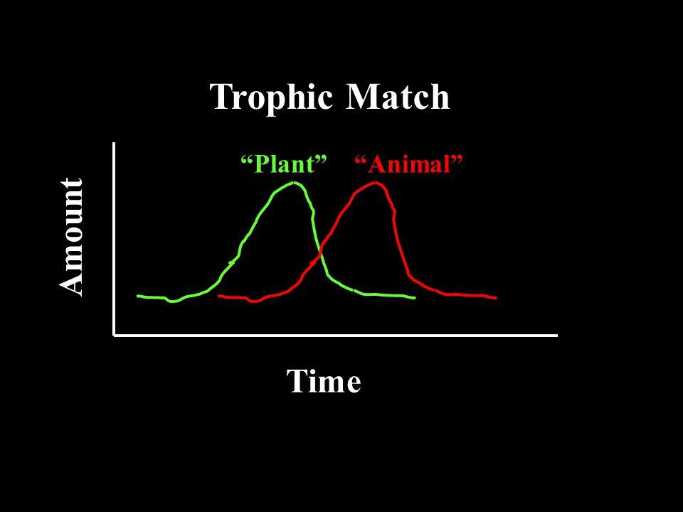 Time Amount Trophic Match Plant Animal