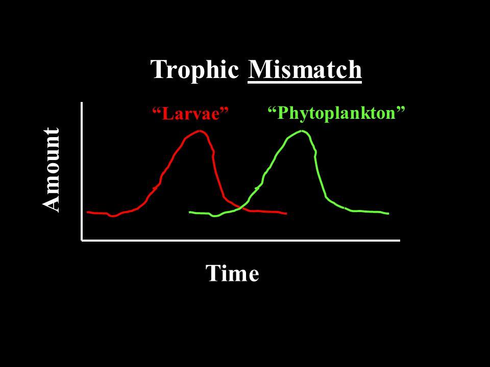 Time Amount Trophic Mismatch Phytoplankton Larvae