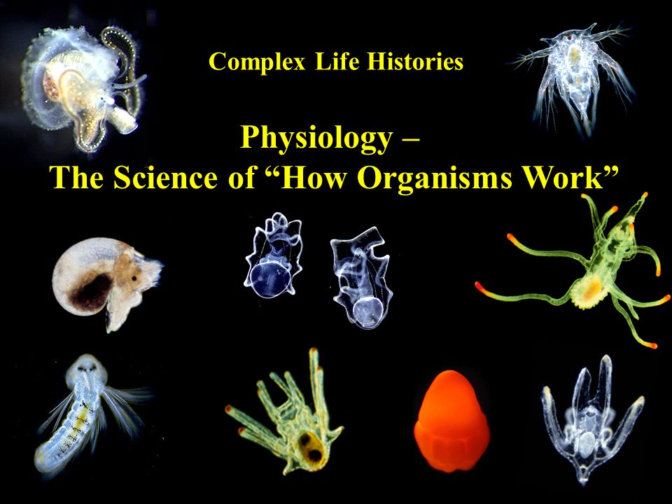 Physiology – The Science of How Organisms Work Complex Life Histories