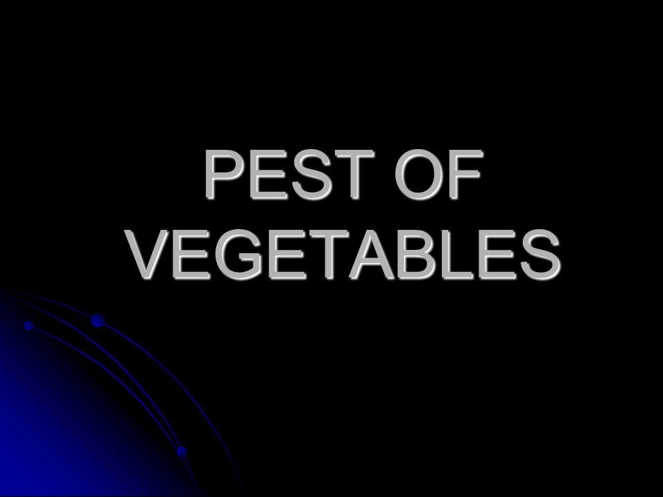 PEST OF VEGETABLES