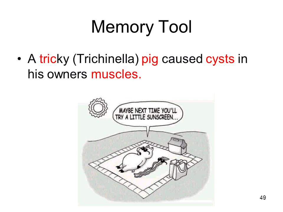 49 Memory Tool A tricky (Trichinella) pig caused cysts in his owners muscles.