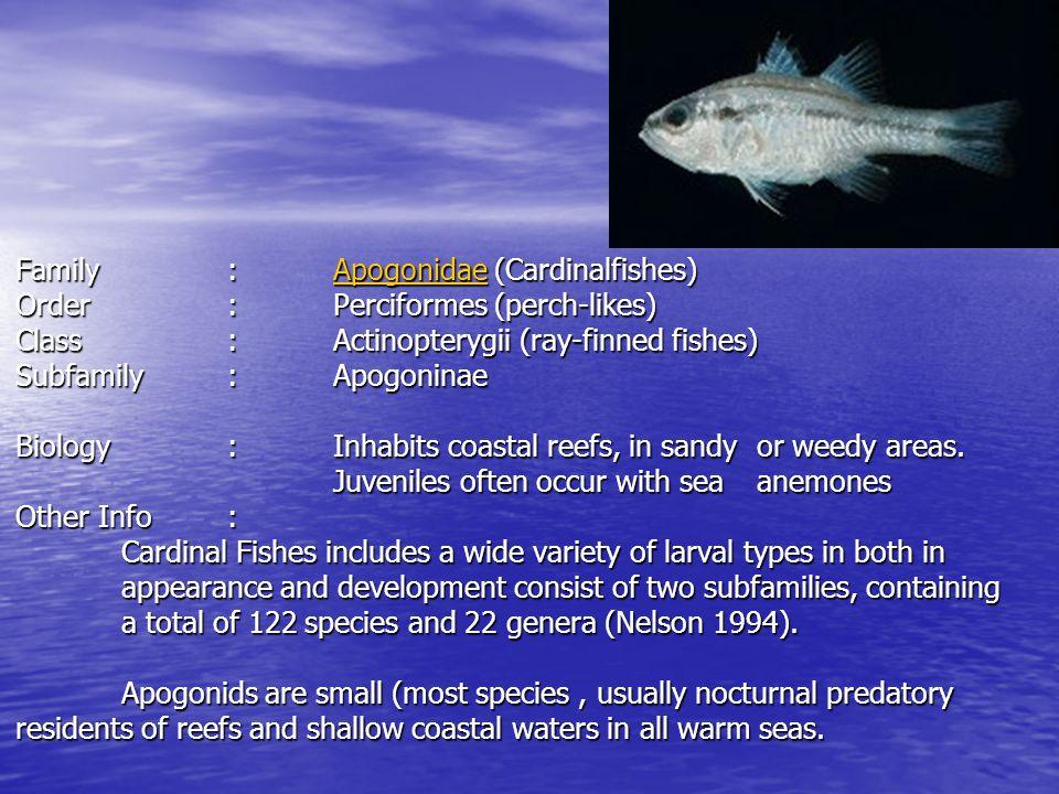 Family: Apogonidae Sampling Location: Andaman Sea Sampling Gear: Bongo net Stage: Post Flexion stage Measurements: Body Length6.97 mm Head Length2.37mm ED.72mm SnL.79mm PAL4.0mm BD2.25mm Counts:D VI+ I,9 A: II,8 P1: 12P2: I,5 C: 9+8 Myomeres: 24