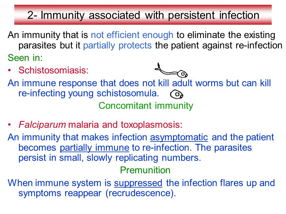 2- Immunity associated with persistent infection An immunity that is not efficient enough to eliminate the existing parasites but it partially protects the patient against re-infection Seen in: Schistosomiasis: An immune response that does not kill adult worms but can kill re-infecting young schistosomula.